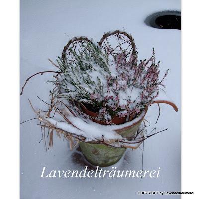 Lavendeltr umerei blumen im schnee for Schneebilder lustig