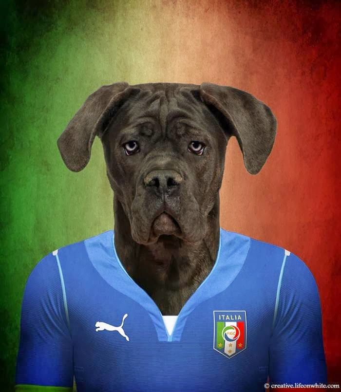 Italy – Cane Corso