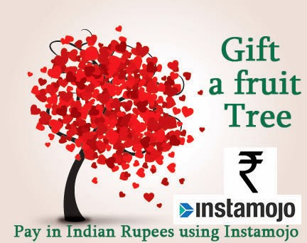 Pay in Indian Rupees