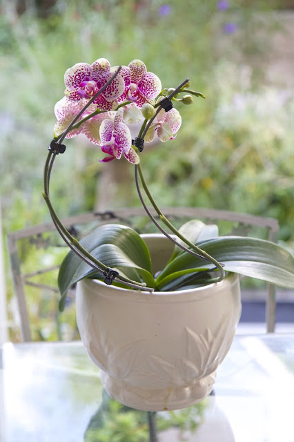 Bend stakes for curved orchid; How to Landscape an Orchid; Nora's Nest