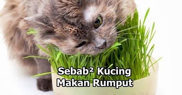 Open Minda Kenapa Kucing Makan Rumput