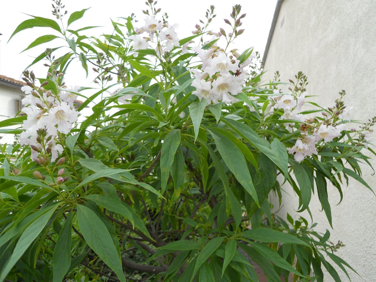 Розы кустовые уход и выращивание 72