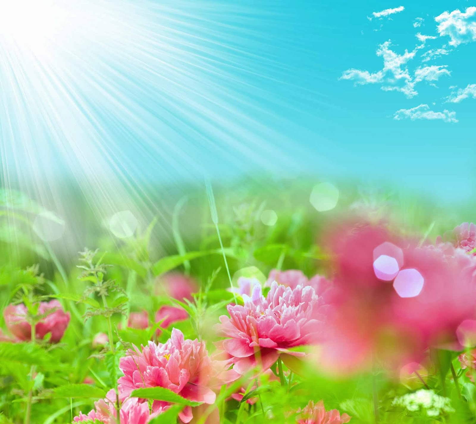 Flower Wallpapers: HQ Wallpapers: Fantasy Flower Wallpapers