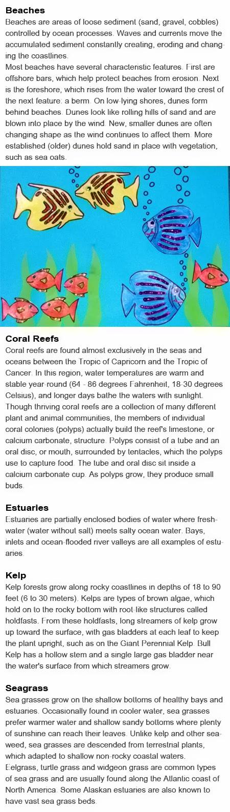 Ocean habitats for kids