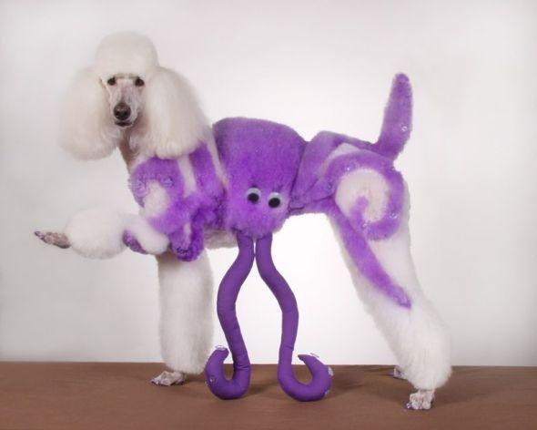 Ren Netherland fotografia animais estimação cães cachorros extreme pets fantasia Polvo