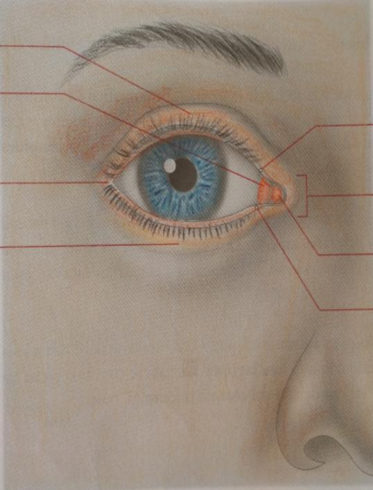 La anatomía Humana: OIDO