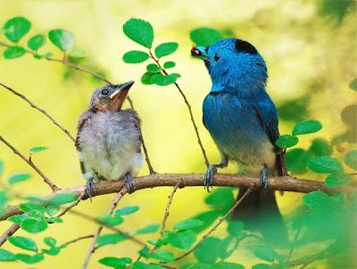 Chim đẹp nhất 2013, hình ảnh chim đẹp