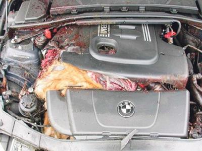 Satu kejadian sempat dirakam apabila pemilik kereta gagal menghidupkan kenderaan kerana enjin dimasuki seekor arnab.