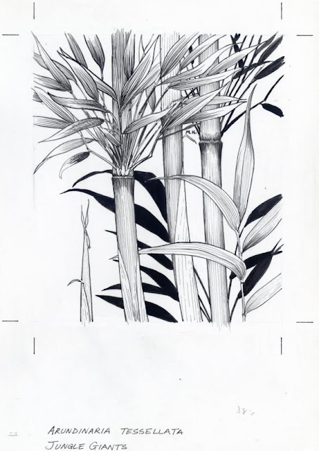 Bamboo Drawing8