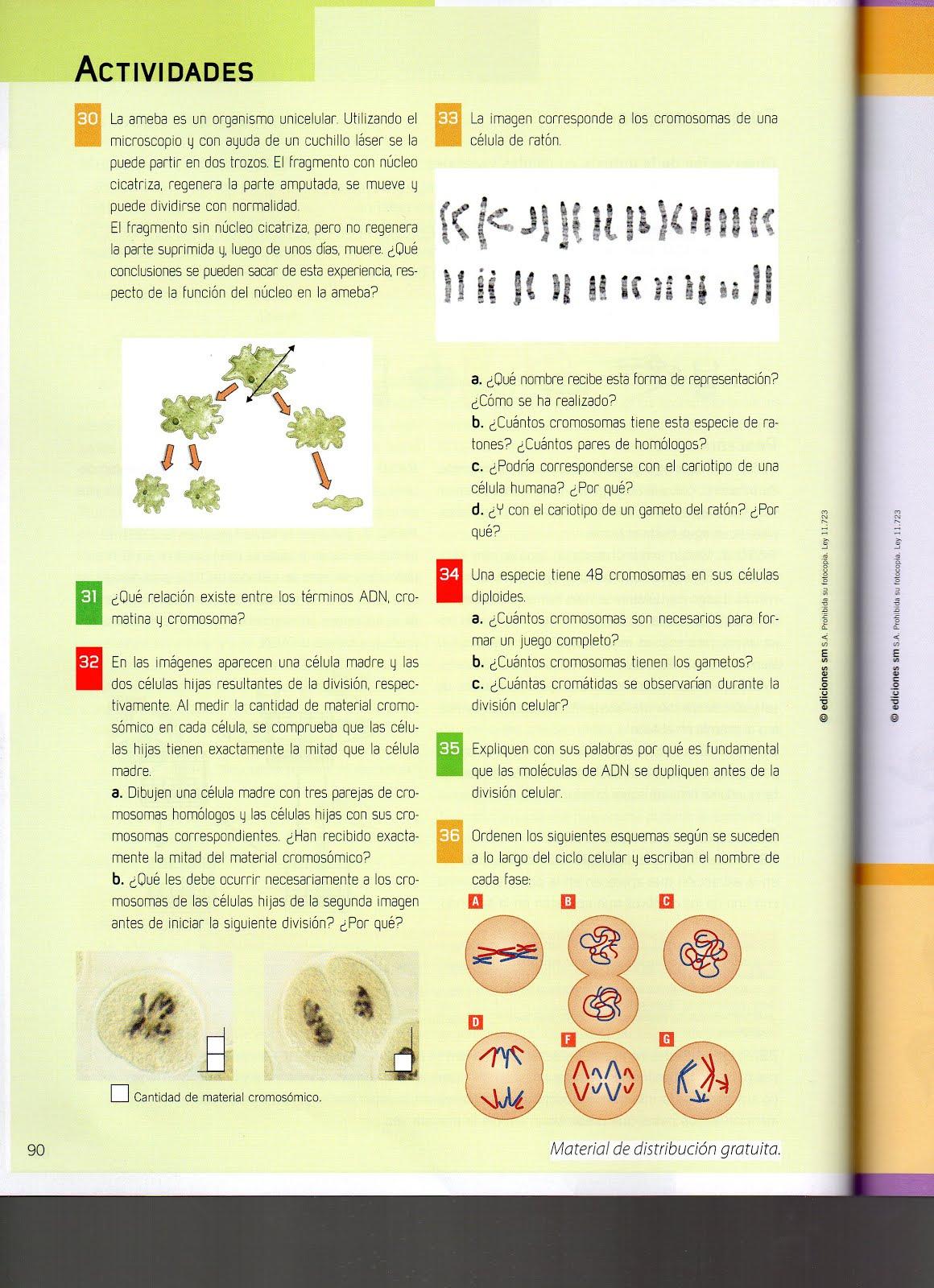 Trabajo Practico N.º 4. La división celular | Media 9 Biologia de ...