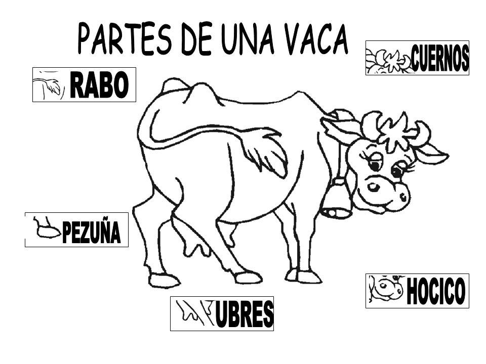 Magnífico Anatomía Externa De Una Vaca Componente - Imágenes de ...