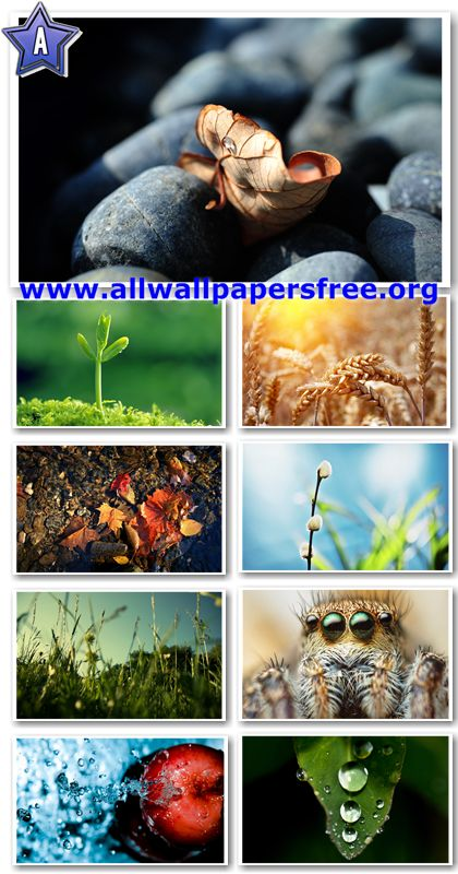 40 Amazing Nature Wallpapers 1920 X 1200 [Set 14]