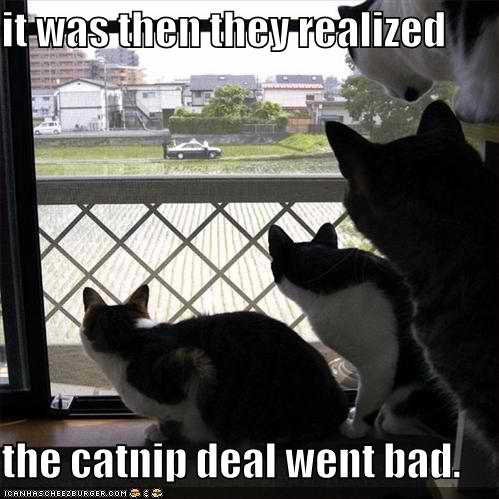 funny catnip kitty funny cat pictures 31819925 499 499 can we have a new witch ours melted wet cat wednesday