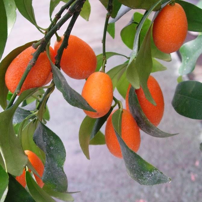 Estilo y hogar rboles frutales para el jard n for Arboles enanos para jardin