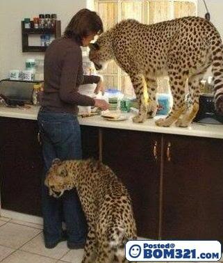 Bela Binatang Buas Dalam Rumah