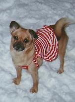 The pet dog name Daisy