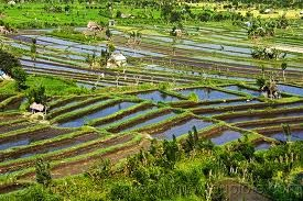 Image gallery sedentary agriculture for Terrace farming meaning
