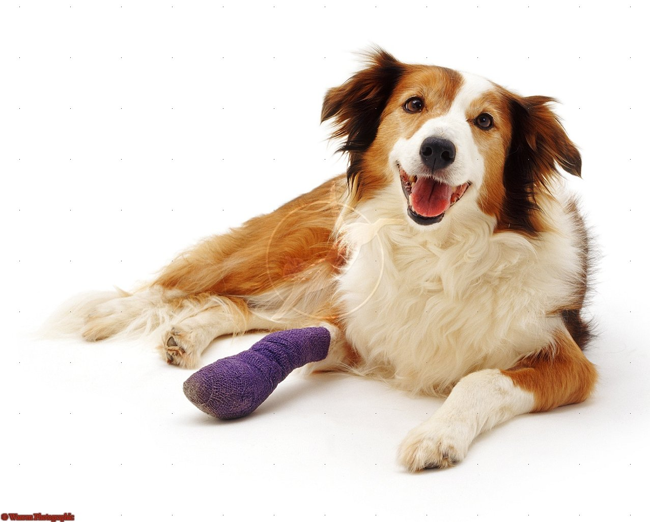 The most common causes of bone fractures in dogs and cats are being -3.bp.blogspot.com