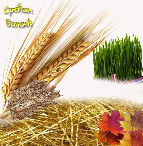 Pšenica za Božić