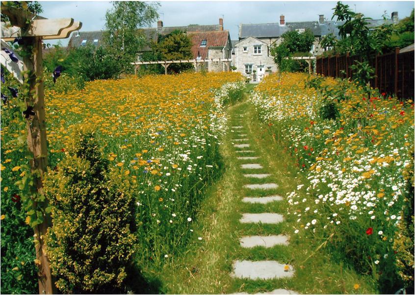 Landscape architecture january 2012 for Wild flower garden designs