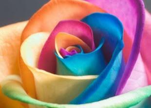 Quero Rosas de Todas as Cores