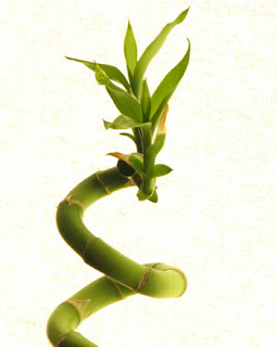 how to make lucky bamboo flower
