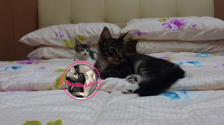 Hanis Sania Tips Untuk Kucing Penuh Kutu Dan Telur Kutu