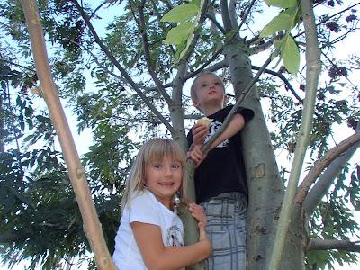 Węgrzce, wchodzenie na drzewa, ratowanie dziecka