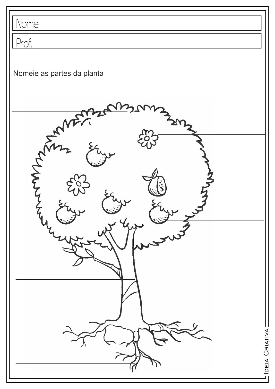 Atividades Educativas Partes das Plantas Ciências Dia da Árvore para Ensino Fundamental