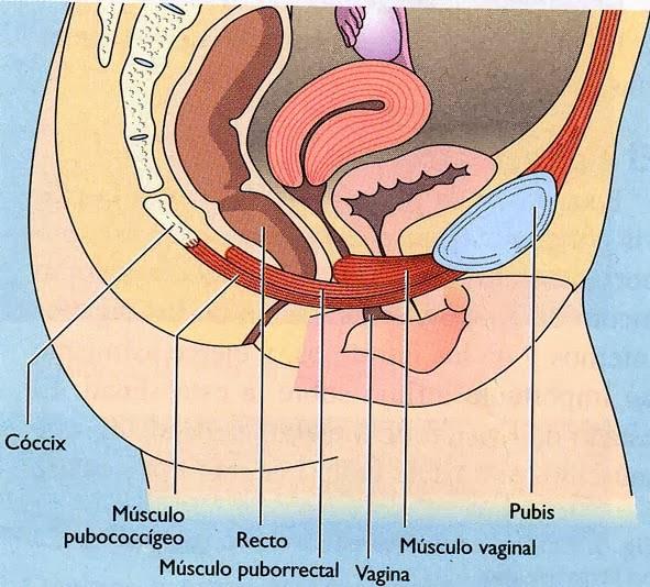 Ventana abierta a la Fisioterapia: Anatomía, Fisiología y ...