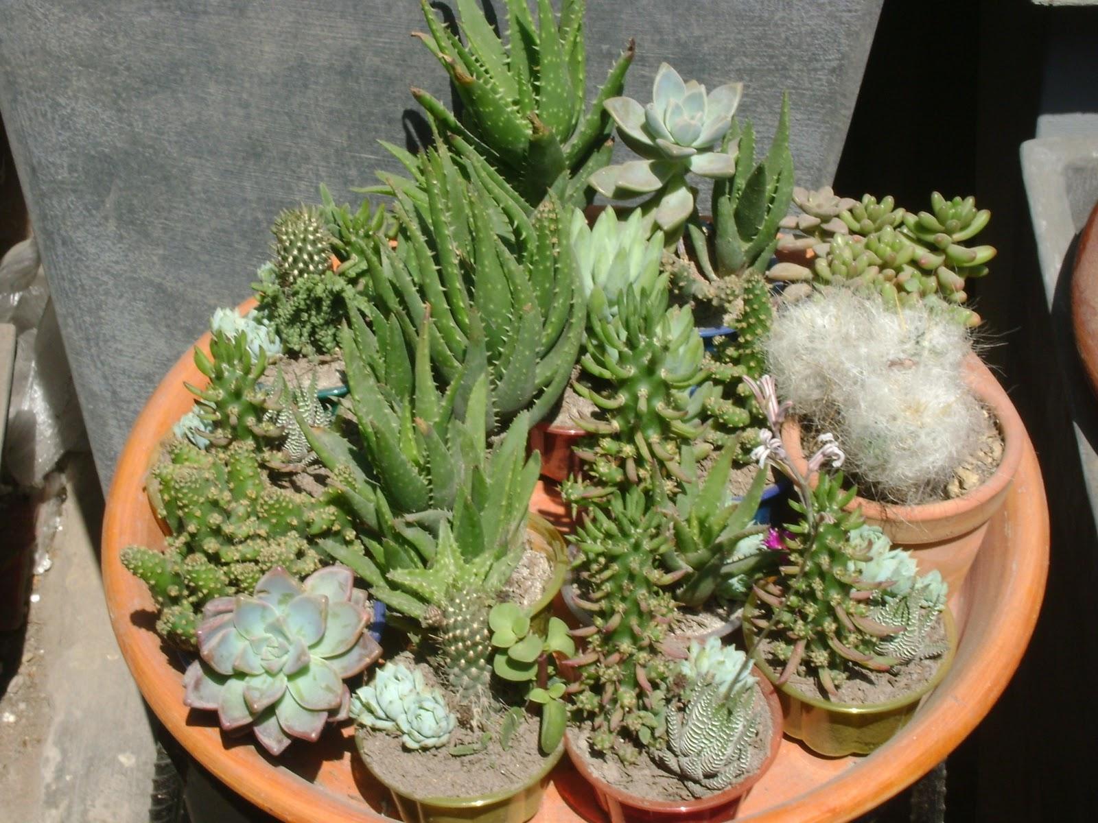 Jardines y macetas fotos de plantas de interior y exterior for Enanos jardin