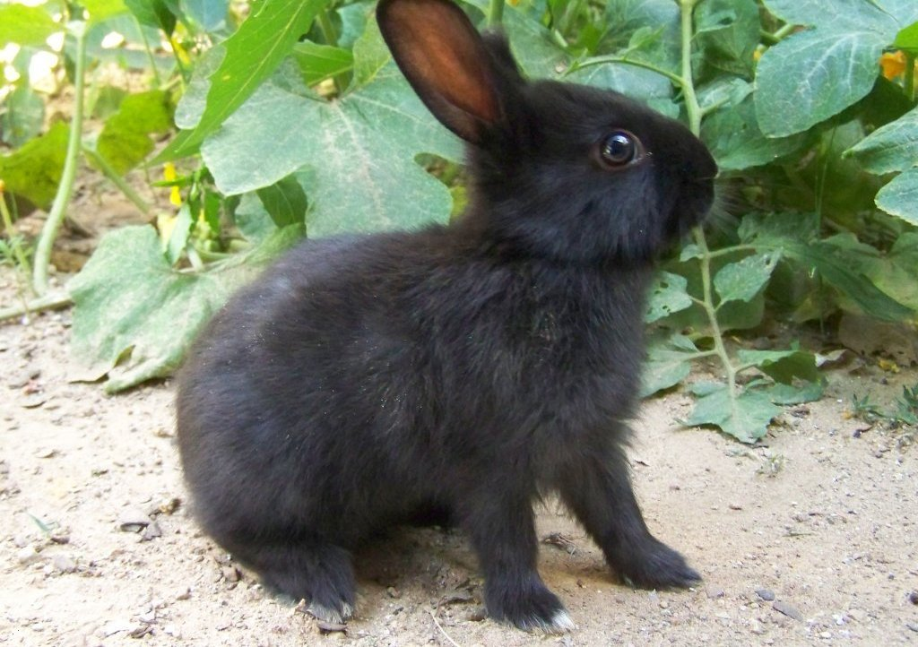 the rabbits Rabbit rabbit rabbit is a superstition found in britain and north america wherein a person says or repeats the words rabbit, rabbits and/or white rabbits aloud upon waking on the first day of a month, to ensure good luck for the rest of it.