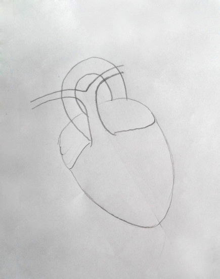 Draw it neat how to draw human heart labeled ccuart Images