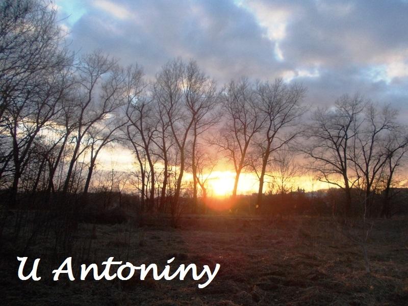 U Antoniny