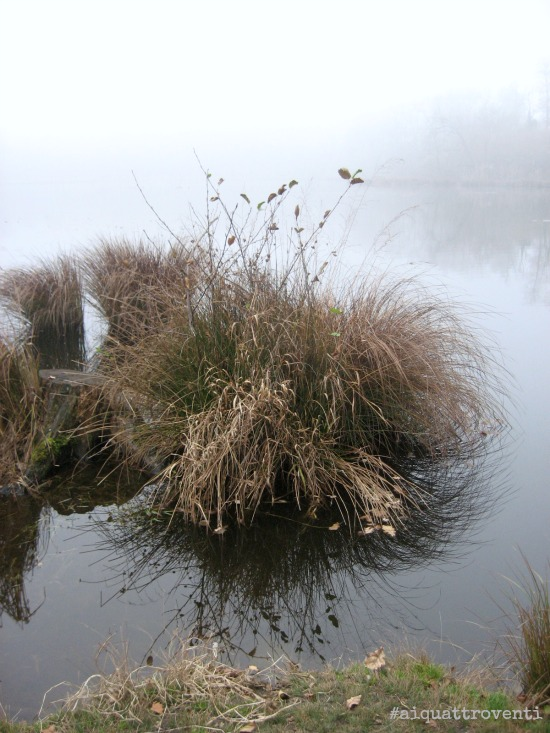 aiquattroventi-autunno-lagoni-riflessi-cespuglio