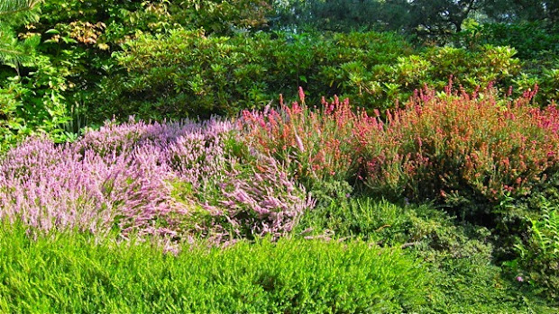 outlander plant guide heathers