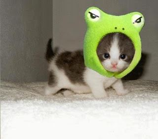 cute kitten with frog hat!