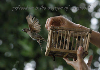 freedom Cover Photo For Facebook