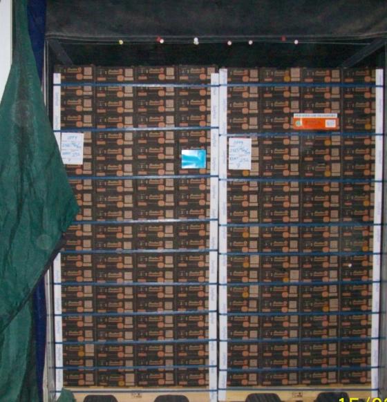 Exportando mango - Pallets por contenedor ...