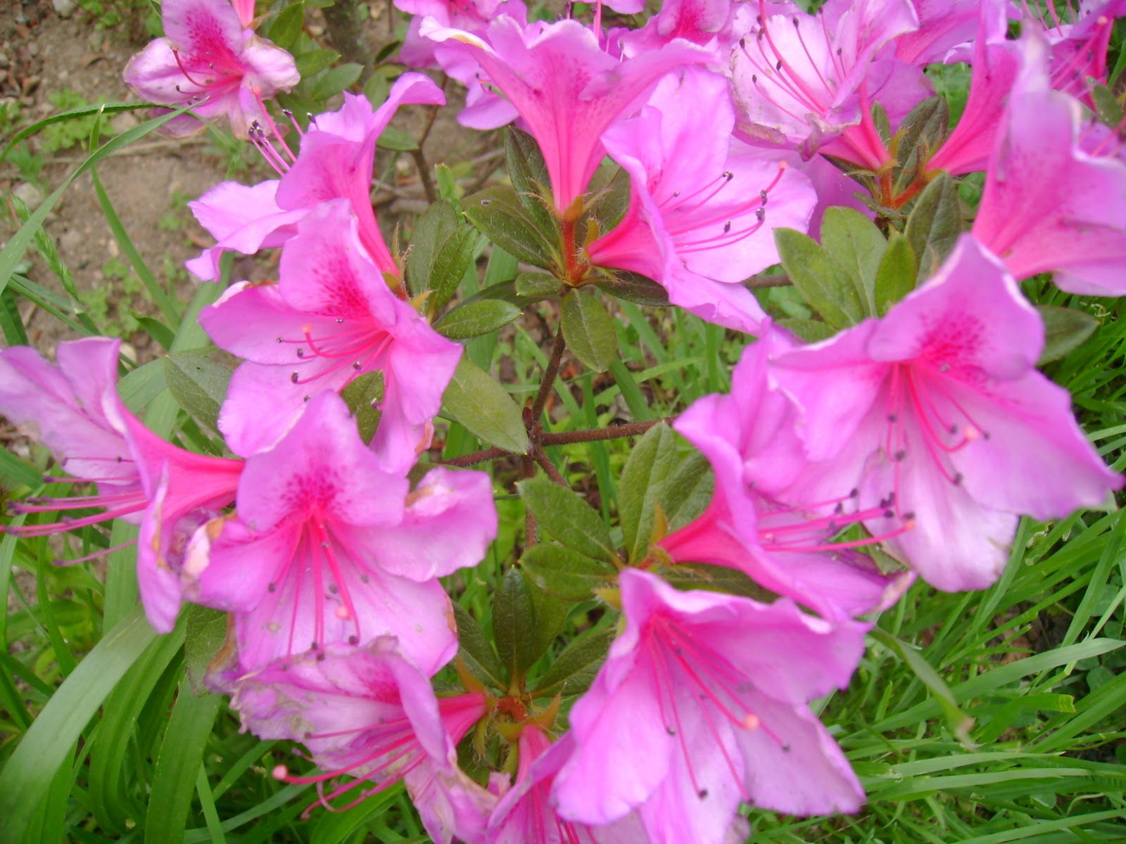 Gardentropics Flowers From Bhutan