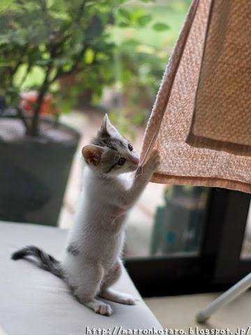 立つ子猫と洗濯物