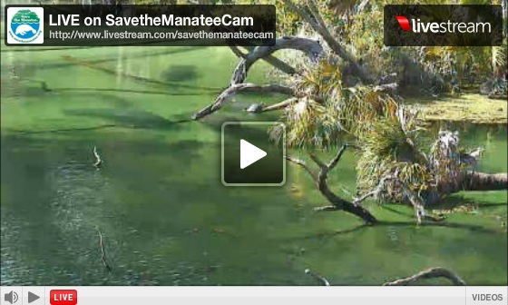 Manatee Cam at Blue Spring State Park