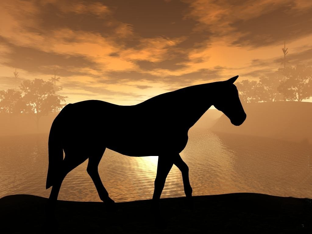 download wallpaper horses sunset - photo #18