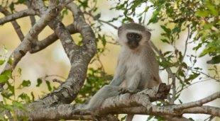 Ternyata Monyet Juga Punya Norma Sosial dari daniel maulana