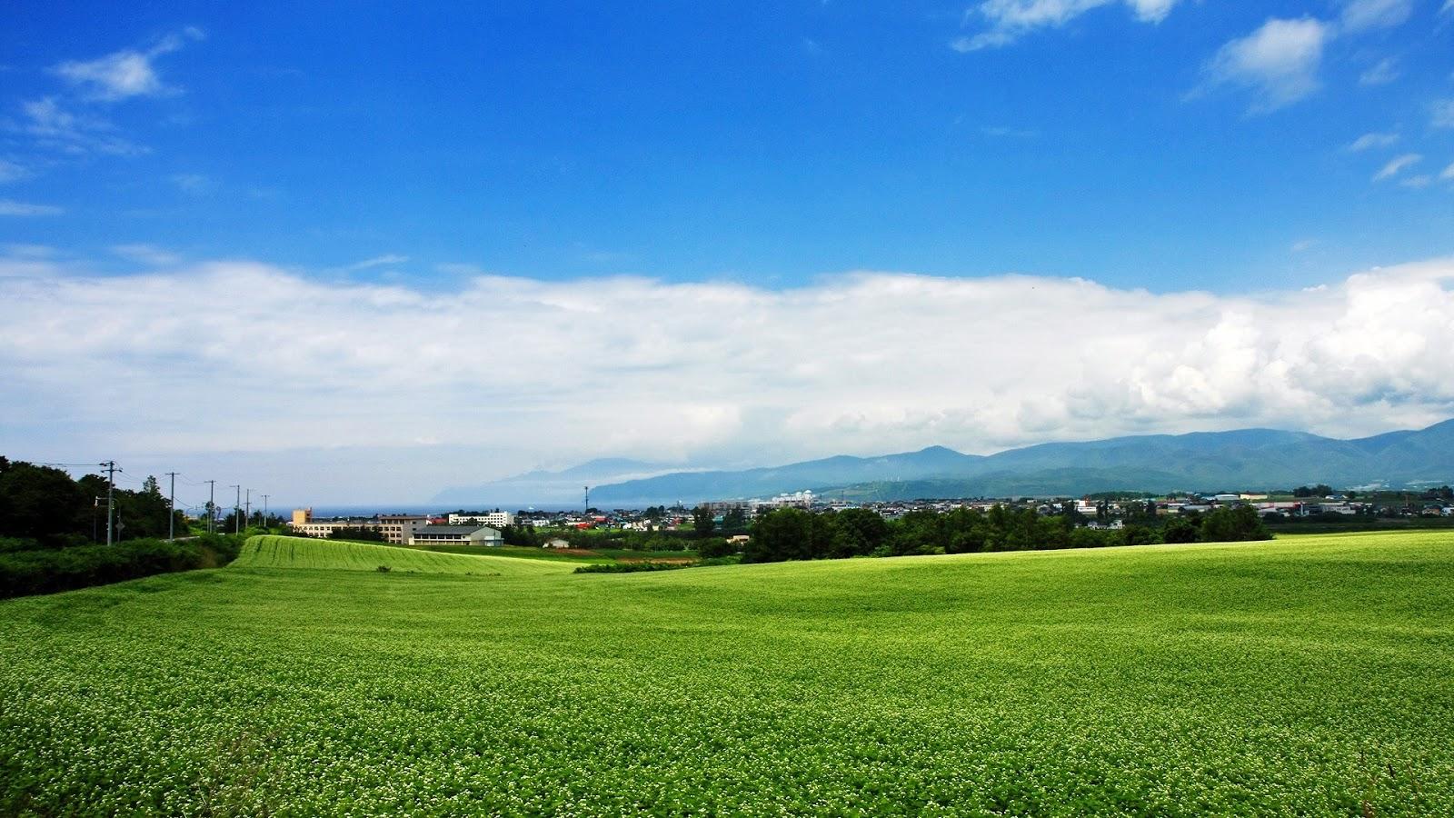 Your Wallpaper Green Field Wallpaper