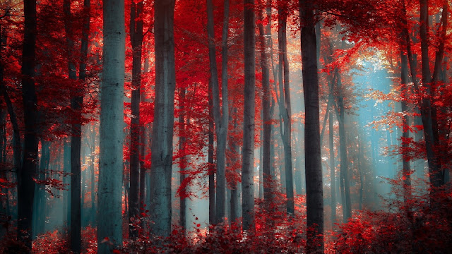 Nature Trees Red HD Wallpaper
