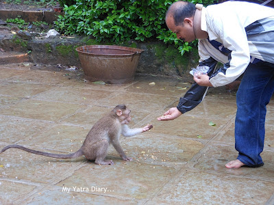 A man affectionately feeds a monkey - Tungareshwar temple in Vasai, Mumbai