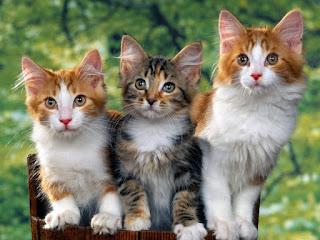 Hukum Jual Beli Kucing dalam Islam