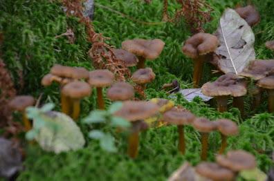 Lauantaina 26.8. sienineuvontaa