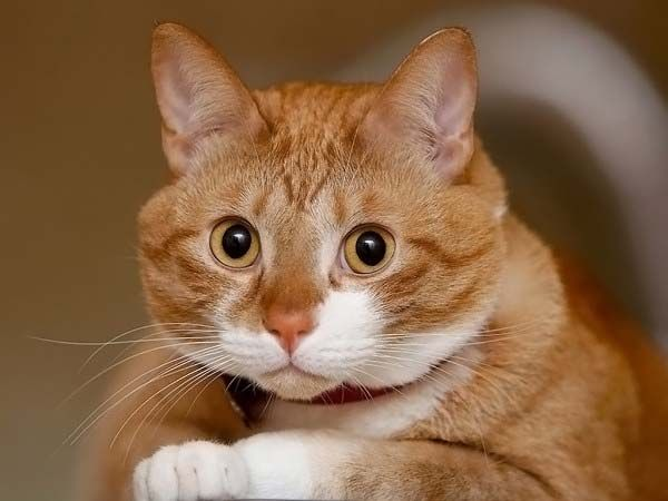 puzzled_cat.jpg